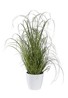 Dísznövény